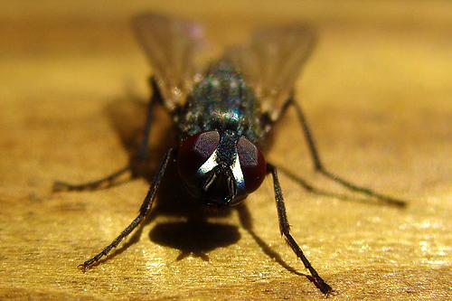 Tag 21 Fliege