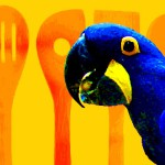 Warum Papageien nicht lachen sollten